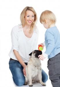 Mops als Therapiehund eingesetzt.