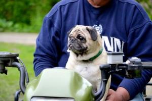 Auf dem Fahrrade in den Fahrrad Hundekorb
