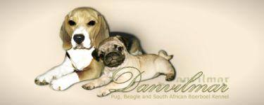 beagle-mops1