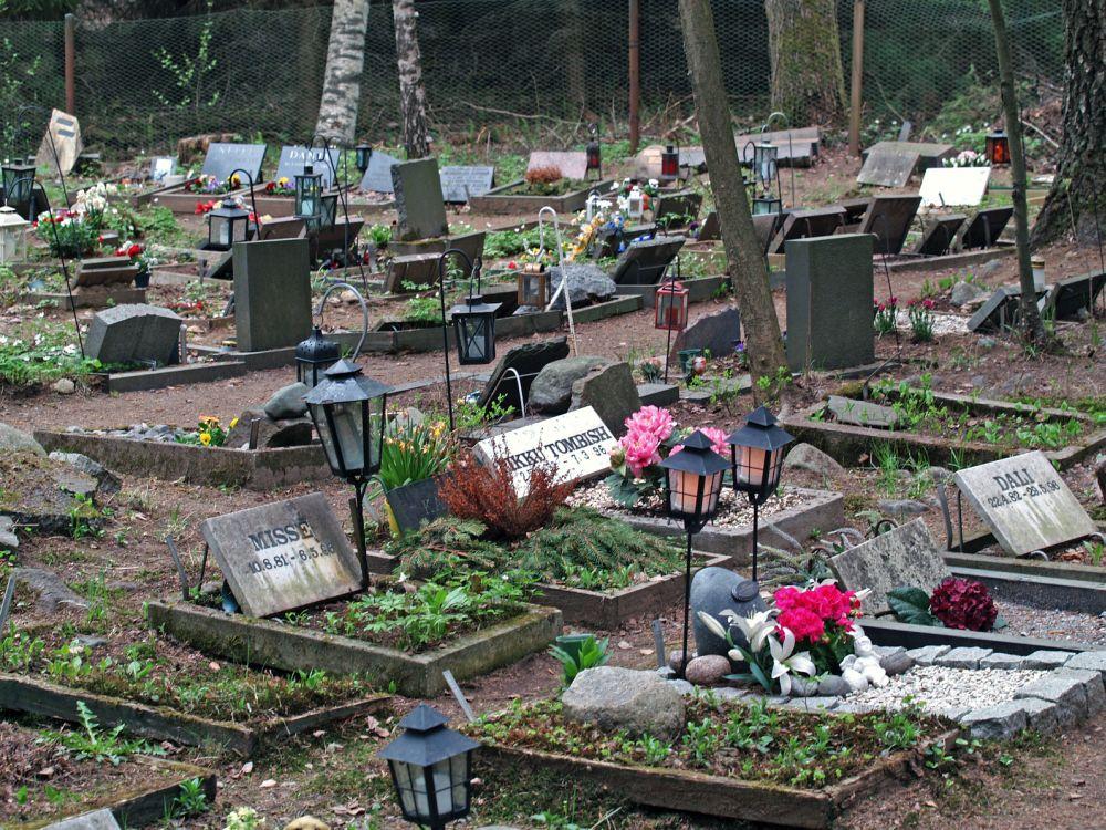 Mops auf den Tierfriedhof