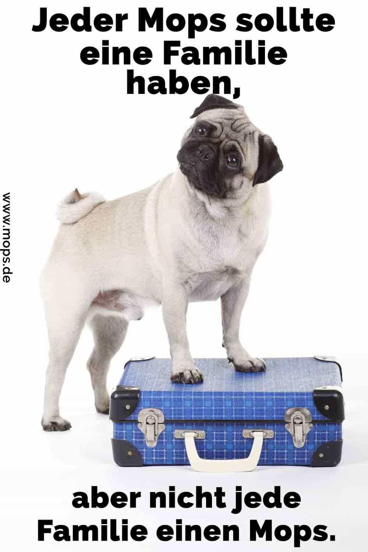 Ein Mops auf dem Koffer