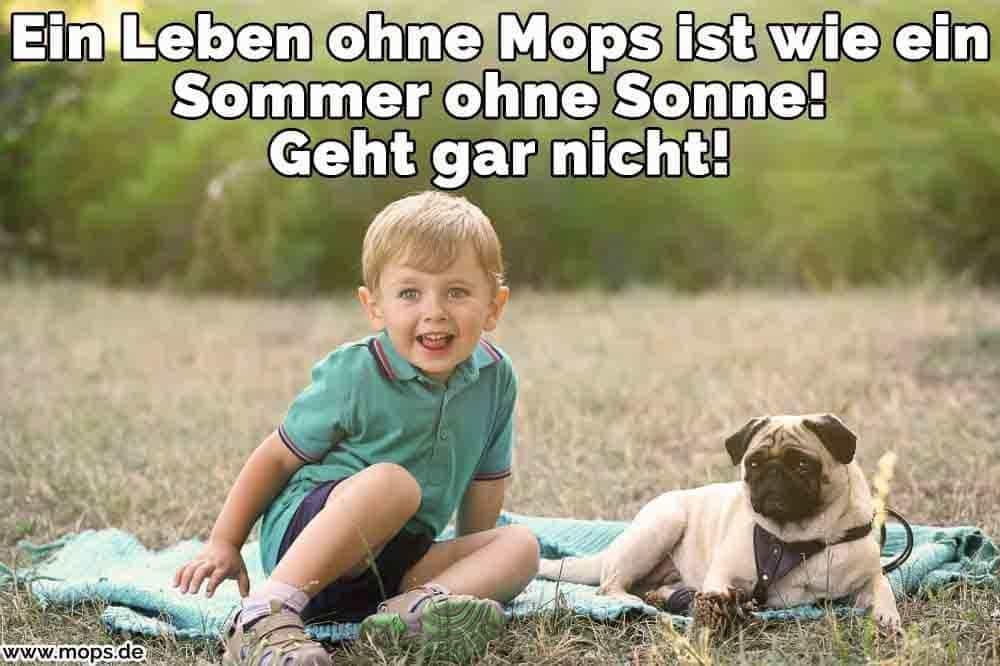 Ein Junge und sein Mops Picknicken